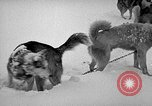 Image of dogs Antarctica, 1947, second 61 stock footage video 65675062646