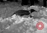 Image of United States Navy personnel Antarctica, 1947, second 19 stock footage video 65675062648
