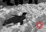 Image of United States Navy personnel Antarctica, 1947, second 24 stock footage video 65675062648
