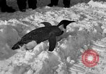 Image of United States Navy personnel Antarctica, 1947, second 26 stock footage video 65675062648