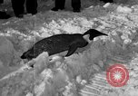 Image of United States Navy personnel Antarctica, 1947, second 27 stock footage video 65675062648