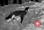 Image of United States Navy personnel Antarctica, 1947, second 28 stock footage video 65675062648