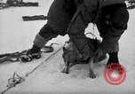 Image of United States Navy personnel Antarctica, 1947, second 5 stock footage video 65675062649