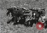 Image of Cavalry Rifle Platoon Kansas United States USA, 1933, second 17 stock footage video 65675062676