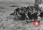 Image of Cavalry Rifle Platoon Kansas United States USA, 1933, second 58 stock footage video 65675062676