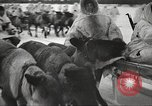 Image of Russian soldiers Eastern Front European Theater, 1943, second 14 stock footage video 65675062686