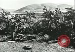 Image of German troops in trenches and foxholes Tunisia North Africa, 1942, second 55 stock footage video 65675062709