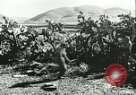 Image of German troops in trenches and foxholes Tunisia North Africa, 1942, second 56 stock footage video 65675062709