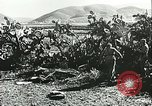 Image of German troops in trenches and foxholes Tunisia North Africa, 1942, second 57 stock footage video 65675062709