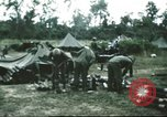 Image of 1st Cavalry troops South Vietnam, 1966, second 5 stock footage video 65675062769