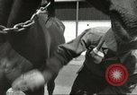Image of 287th Military Police Company Berlin Germany, 1957, second 20 stock footage video 65675062914
