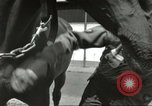 Image of 287th Military Police Company Berlin Germany, 1957, second 23 stock footage video 65675062914
