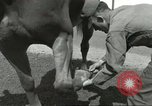Image of 287th Military Police Company Berlin Germany, 1957, second 34 stock footage video 65675062914