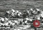 Image of Japanese men Japan, 1939, second 47 stock footage video 65675062953
