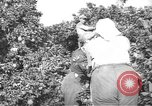 Image of Palestinian civilians Rehovot Palestine, 1938, second 2 stock footage video 65675062960