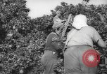Image of Palestinian civilians Rehovot Palestine, 1938, second 6 stock footage video 65675062960