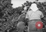 Image of Palestinian civilians Rehovot Palestine, 1938, second 11 stock footage video 65675062960