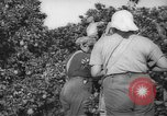 Image of Palestinian civilians Rehovot Palestine, 1938, second 12 stock footage video 65675062960