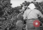 Image of Palestinian civilians Rehovot Palestine, 1938, second 13 stock footage video 65675062960