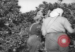 Image of Palestinian civilians Rehovot Palestine, 1938, second 15 stock footage video 65675062960
