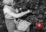 Image of Palestinian civilians Rehovot Palestine, 1938, second 21 stock footage video 65675062960