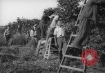 Image of Palestinian civilians Rehovot Palestine, 1938, second 23 stock footage video 65675062960
