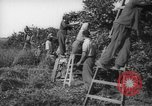 Image of Palestinian civilians Rehovot Palestine, 1938, second 27 stock footage video 65675062960