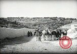 Image of Small boy walking with camels Amman Transjordan, 1945, second 6 stock footage video 65675062976