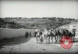 Image of Small boy walking with camels Amman Transjordan, 1945, second 10 stock footage video 65675062976