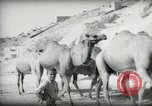 Image of Small boy walking with camels Amman Transjordan, 1945, second 19 stock footage video 65675062976