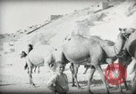 Image of Small boy walking with camels Amman Transjordan, 1945, second 20 stock footage video 65675062976