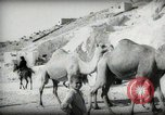 Image of Small boy walking with camels Amman Transjordan, 1945, second 21 stock footage video 65675062976