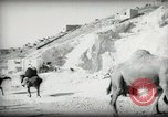 Image of Small boy walking with camels Amman Transjordan, 1945, second 24 stock footage video 65675062976