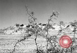 Image of 1st Cavalry Division Fort Bliss Texas USA, 1942, second 2 stock footage video 65675063100