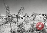 Image of 1st Cavalry Division Fort Bliss Texas USA, 1942, second 4 stock footage video 65675063100
