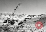 Image of 1st Cavalry Division Fort Bliss Texas USA, 1942, second 12 stock footage video 65675063100