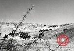 Image of 1st Cavalry Division Fort Bliss Texas USA, 1942, second 13 stock footage video 65675063100