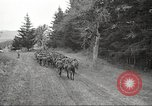 Image of 1st Cavalry Division Salem Oregon USA, 1942, second 61 stock footage video 65675063115
