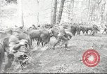 Image of 1st Cavalry Division Salem Oregon USA, 1942, second 1 stock footage video 65675063116