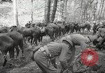 Image of 1st Cavalry Division Salem Oregon USA, 1942, second 7 stock footage video 65675063116