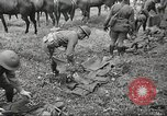 Image of 1st Cavalry Division Salem Oregon USA, 1942, second 14 stock footage video 65675063116