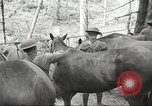 Image of 1st Cavalry Division Salem Oregon USA, 1942, second 21 stock footage video 65675063116