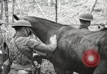 Image of 1st Cavalry Division Salem Oregon USA, 1942, second 25 stock footage video 65675063116