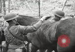 Image of 1st Cavalry Division Salem Oregon USA, 1942, second 26 stock footage video 65675063116