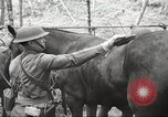Image of 1st Cavalry Division Salem Oregon USA, 1942, second 28 stock footage video 65675063116