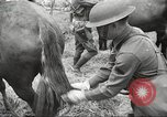 Image of 1st Cavalry Division Salem Oregon USA, 1942, second 30 stock footage video 65675063116