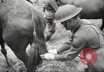 Image of 1st Cavalry Division Salem Oregon USA, 1942, second 31 stock footage video 65675063116