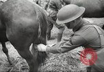 Image of 1st Cavalry Division Salem Oregon USA, 1942, second 32 stock footage video 65675063116