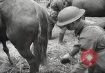 Image of 1st Cavalry Division Salem Oregon USA, 1942, second 33 stock footage video 65675063116