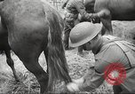 Image of 1st Cavalry Division Salem Oregon USA, 1942, second 34 stock footage video 65675063116